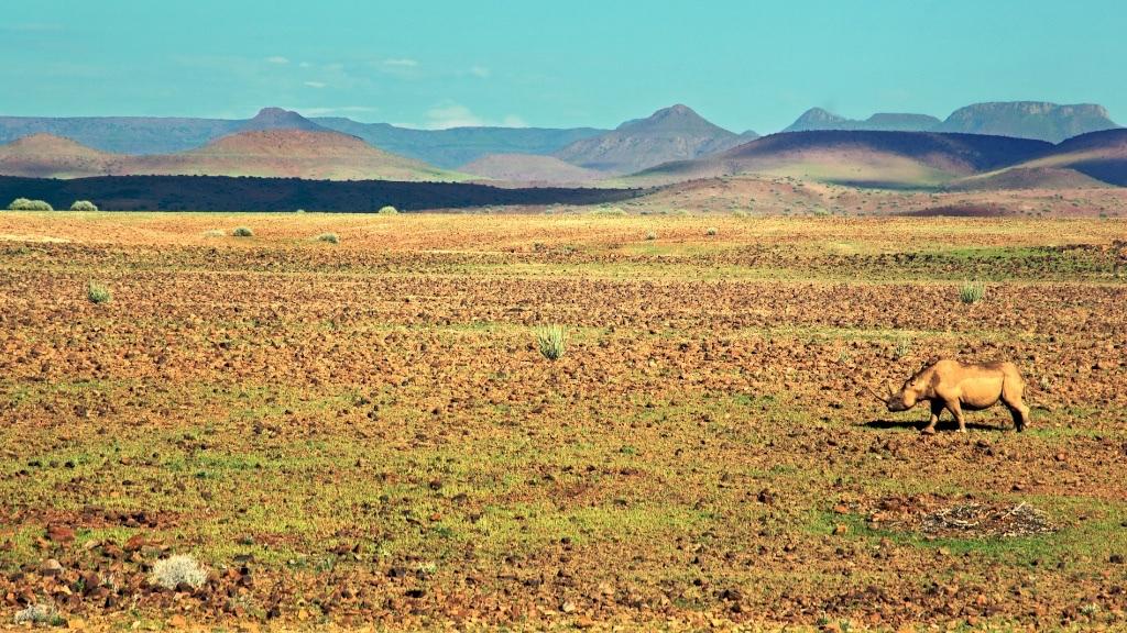 RHINO_NAMIBIA (1)